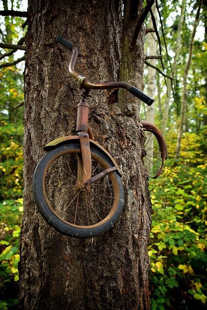La leyenda de la bici en el árbol.